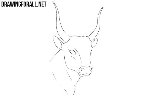 How to Draw a Bull Head | Drawingforall