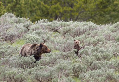 Wise Guides Ideal 5 Day Trip To Yellowstone & Grand Teton