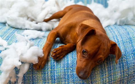Is Your Pet Stressed Out? - Better Nutrition