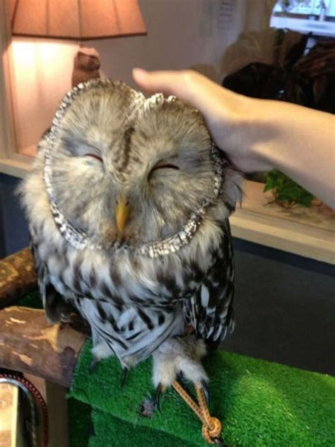 An Unusual Owl Bar Where You can Drink Coffee While
