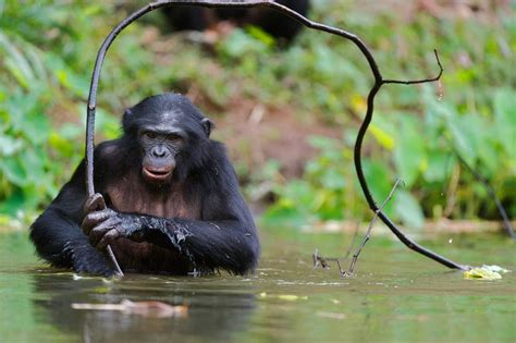 They're just like us! 6 animals that use tools   From the